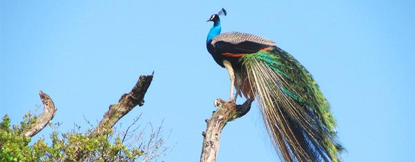 BUNDALA-BIRD