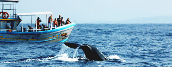 MIRISSA-WHALE-WATCHING