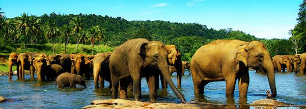 culture-ELEPHANT