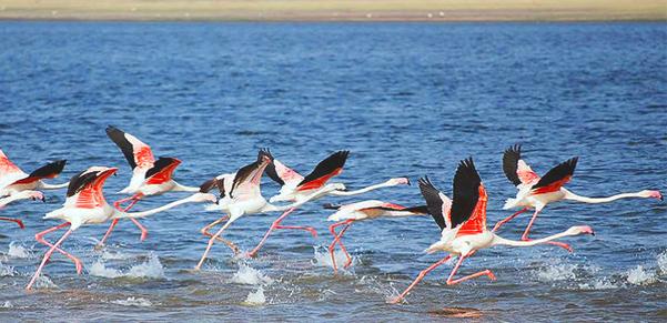 bundala-birds