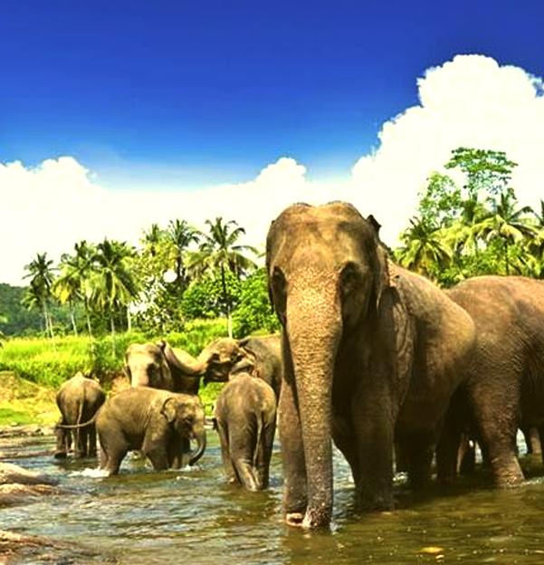 elephant-orphange
