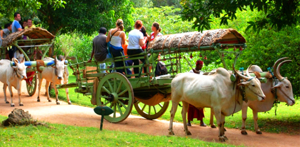 habarana-cart-riding