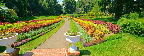 peradeniya-botanical-garden