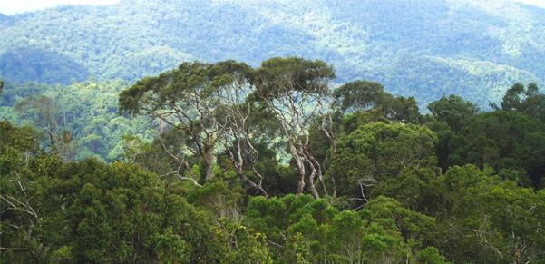 sinharaja-forest