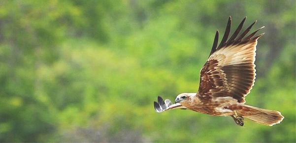 yala-birds